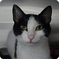 Adopt A Pet :: Trixie - Elyria, OH