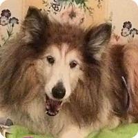 Adopt A Pet :: Princess - House Springs, MO