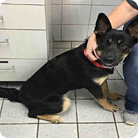 Adopt A Pet :: KEESHA - Canfield, OH