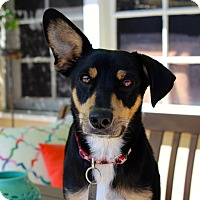 Adopt A Pet :: Izzi - Loves Kids! - Los Angeles, CA