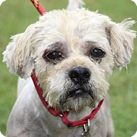 Adopt A Pet :: Harry Potter - Chester Springs, PA