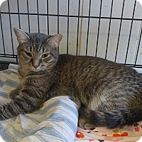 Adopt A Pet :: Shelly - Acushnet, MA