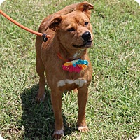 Adopt A Pet :: Jordan - Lacey, WA