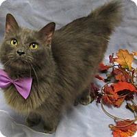 Adopt A Pet :: UNCLE FESTER - Lexington, NC