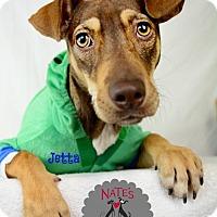 Adopt A Pet :: Jetta - Bradenton, FL