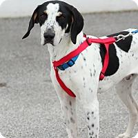 Adopt A Pet :: Wrigley - Lafayette, IN