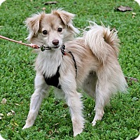 Adopt A Pet :: Zippy - Winters, CA