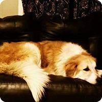 Adopt A Pet :: Samantha - Battleboro, VT
