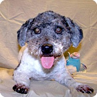 Adopt A Pet :: 16-d12-040 Hobo - Fayetteville, TN