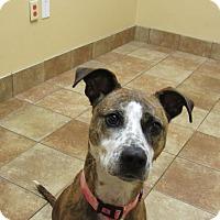 Adopt A Pet :: Ezir *Petsmart GB* - Appleton, WI