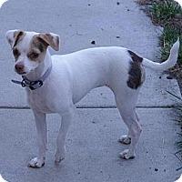 Adopt A Pet :: Lily - Sacramento, CA