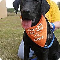 Adopt A Pet :: Libby - Baton Rouge, LA