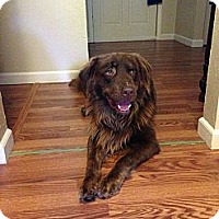 Adopt A Pet :: Buster - New Boston, NH