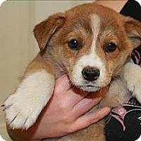 Adopt A Pet :: Teegan (PENDING) - Chicago, IL