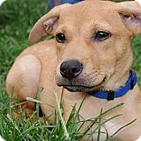 Adopt A Pet :: London - Reisterstown, MD