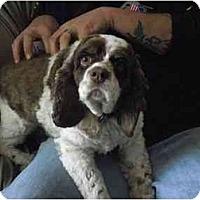 Adopt A Pet :: Leelo - Tacoma, WA
