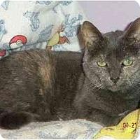 Adopt A Pet :: Lynn - Westfield, MA