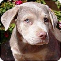 Adopt A Pet :: John - Gilbert, AZ