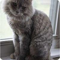 Adopt A Pet :: Precious - Xenia, OH