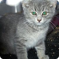 Adopt A Pet :: Snookie - Fort Wayne, IN