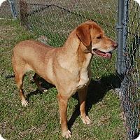 Adopt A Pet :: Della - Manning, SC
