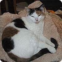 Adopt A Pet :: Nikki - Richland, MI