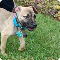 Adopt A Pet :: Turner - Alpharetta, GA