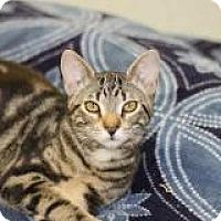 Adopt A Pet :: Albert - El Cajon, CA