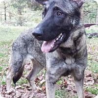 Adopt A Pet :: Sage - Louisville, KY