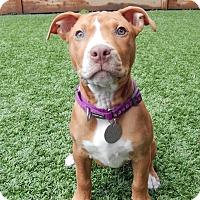 Adopt A Pet :: Thelma - San Jose, CA