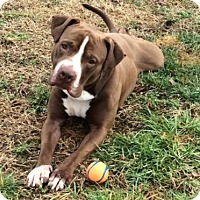 Adopt A Pet :: Tonka - Greenville, SC