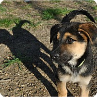 Adopt A Pet :: Tucker Adoption pending - Manchester, CT