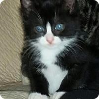 Adopt A Pet :: Theo - Island Park, NY