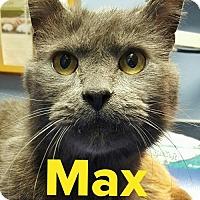 Adopt A Pet :: Max - Grand Blanc, MI