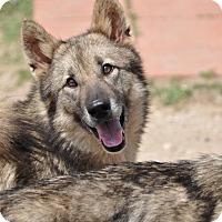 Adopt A Pet :: Khalesi - Dripping Springs, TX