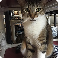 Adopt A Pet :: Jack - Boca Raton, FL