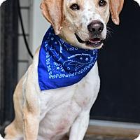 Adopt A Pet :: Zeus - Baton Rouge, LA