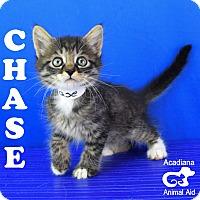 Adopt A Pet :: Chase O. - Carencro, LA