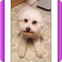 Adopt A Pet :: Pending!!Luci & Muffin - IN - Tulsa, OK
