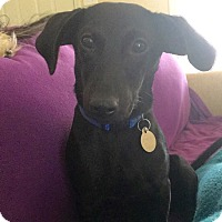 Adopt A Pet :: Hadley - Huntsville, AL