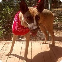 Adopt A Pet :: Florence - Santa Ana, CA