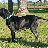 Adopt A Pet :: Jewel - DuQuoin, IL