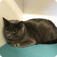 Adopt A Pet :: Sally - Boise, ID