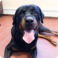 Adopt A Pet :: Shadow - Rexford, NY