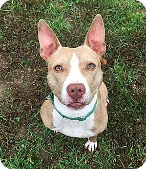 Pit Bull Terrier Mix Dog for adoption in Wilmington, Delaware - Baby Girl
