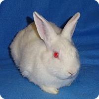 Adopt A Pet :: Lulu - Woburn, MA