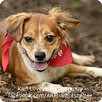 Adopt A Pet :: Sailor - Portland, OR