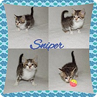 Adopt A Pet :: Sniper - Buffalo, IN