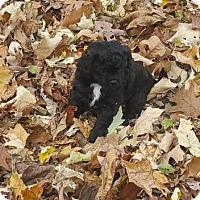 Adopt A Pet :: Manzana - Racine, WI