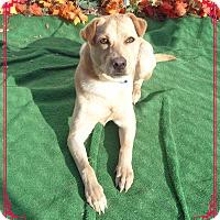 Adopt A Pet :: TIKO - Marietta, GA
